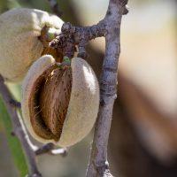 Naturkosmetik und Pflanzen Extrakte mit DMSO und Mandelöl
