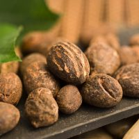 Naturkosmetik und Pflanzen Extrakte mit DMSO und Shea Butter